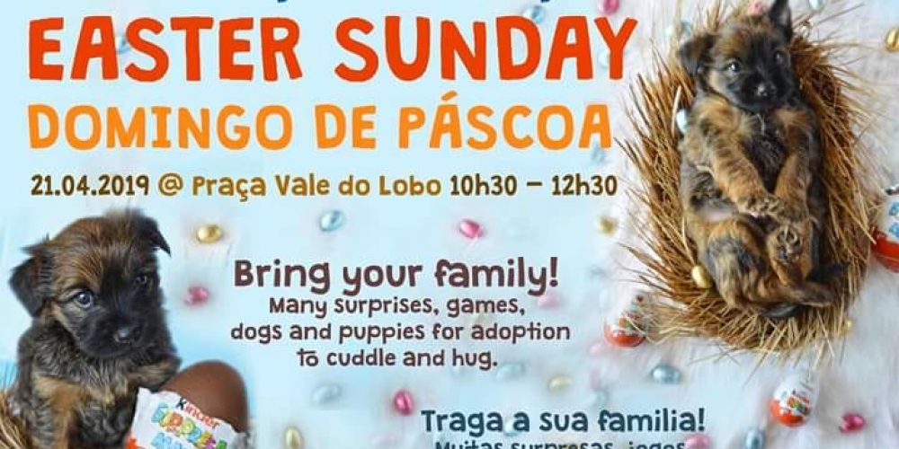 Animal Rescue Algarve Easter